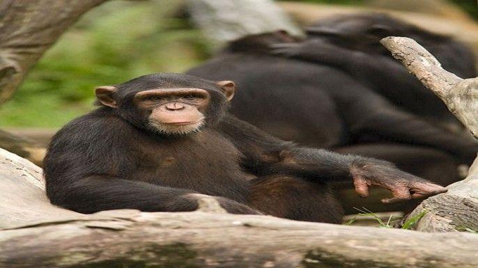 Singapore Zoo: Jungle International Buffet Breakfast Add-on