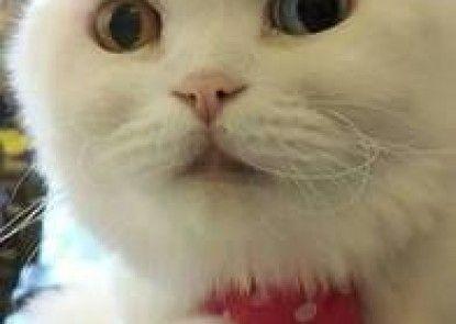 Smokey Cat B&B