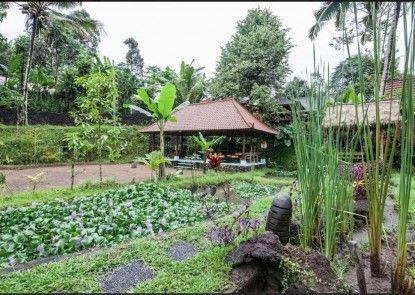Song Broek Jungle Resort Taman