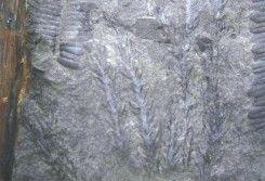 Taman Bumi Merangin (By UNESCO)