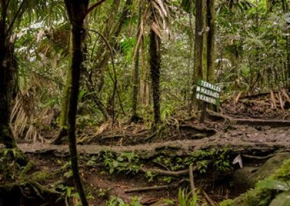 Termales del Bosque