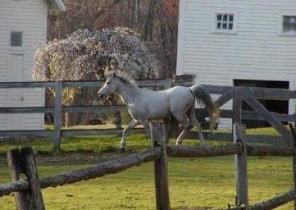 The Inn on the Horse Farm