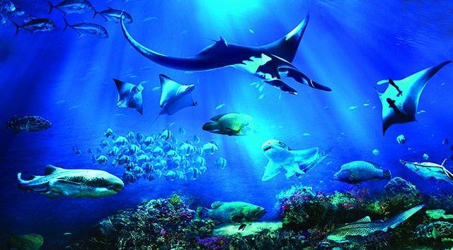 S.E.A. Aquarium™ E-ticket