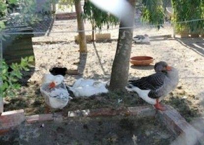 Turisme Rural Mas Ramades