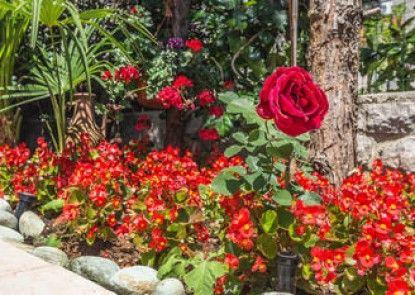Villa Roses Apartments & Wellness