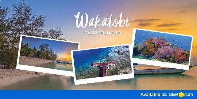 Wakatobi Snorkeling 3Days