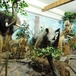 Rahmat International Wildlife Museum & Gallery
